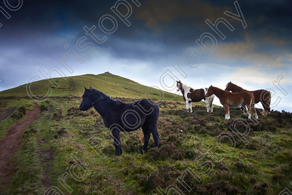 Brecon Beacons 041 