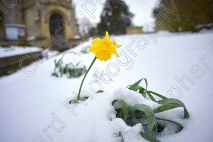 Lacock Curch 009 