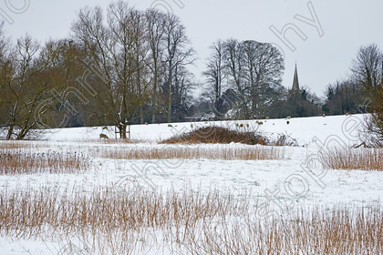 Reybridge 009 