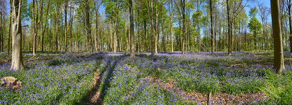 Westwoods-Panorama2 