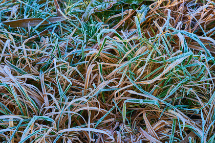 Frost on grass 001 