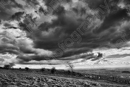 Cheddar 001 